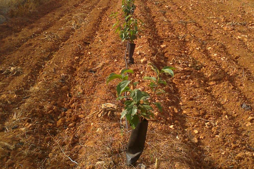 Agroserveis
